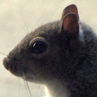 squirrelclose01